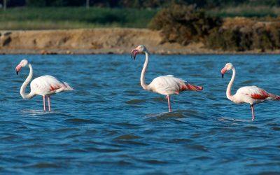 La laguna de Santa Gilla